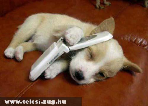 Telefonáló kutya
